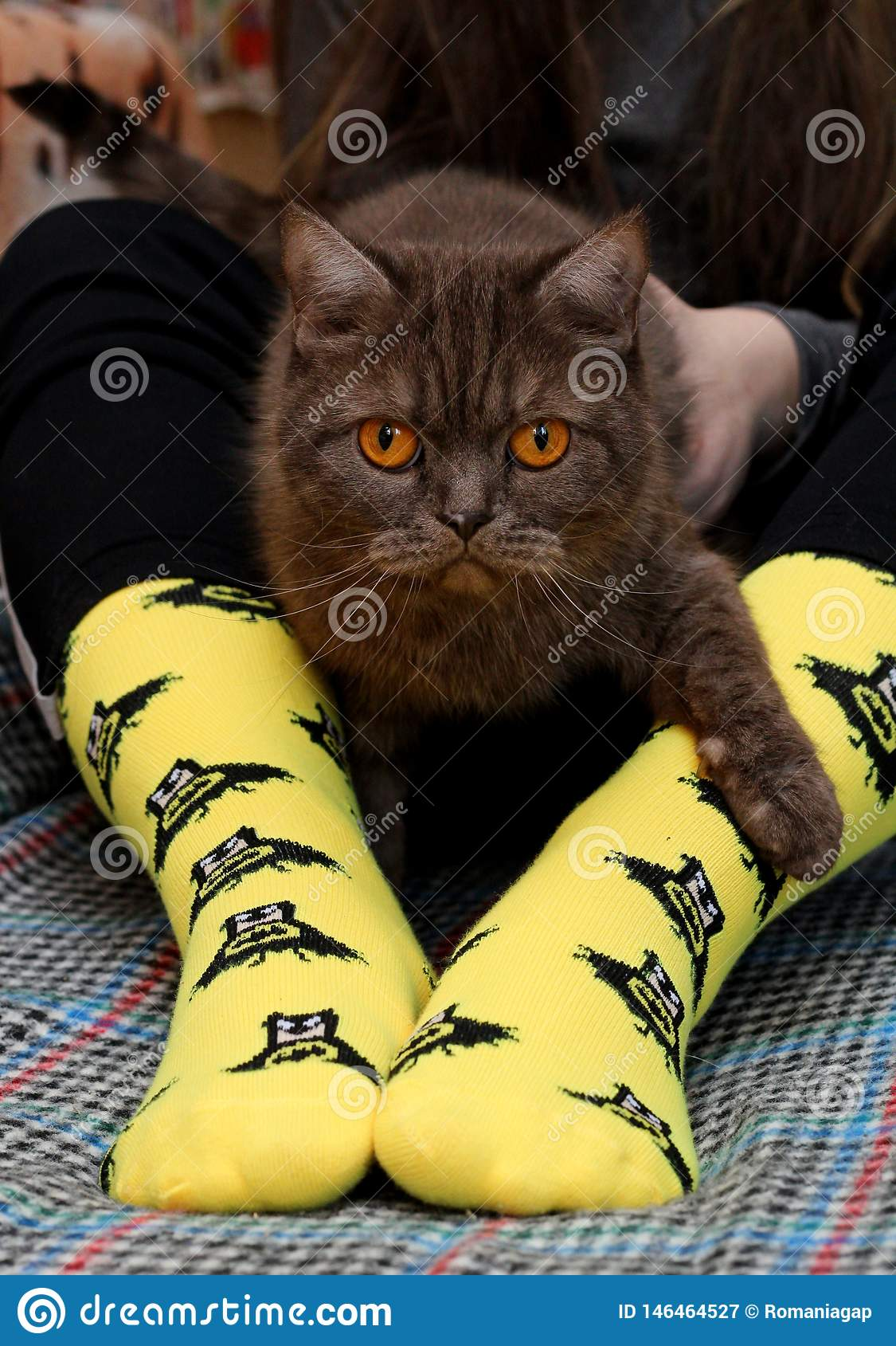 Teen girl with sad Scottish cat on knees sitting on couch. Yellow socks with black Batman pattern. Front view