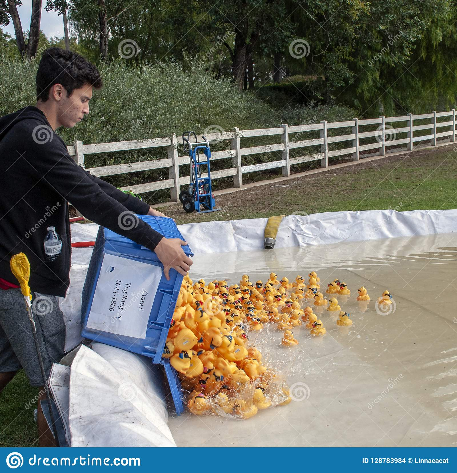 Teen Volunteer Dumps a crate of rubber duckies into the man-made pond during the Rubber Duck Festival