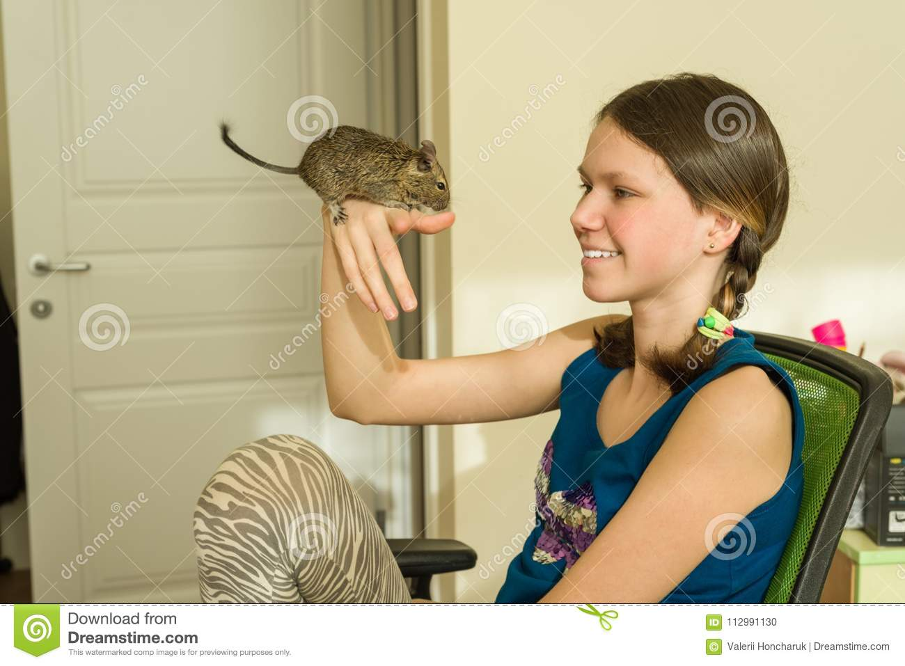 Teenage girl holding a pet on her hand - Chilean squirrel degus