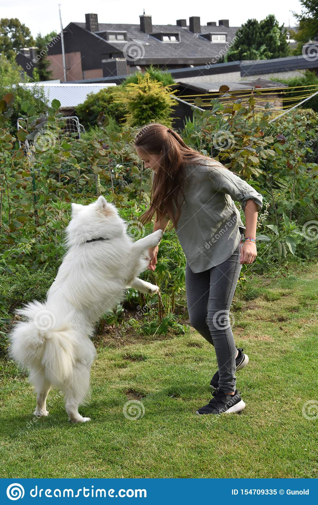 Teenage girl plays with a young samoyed