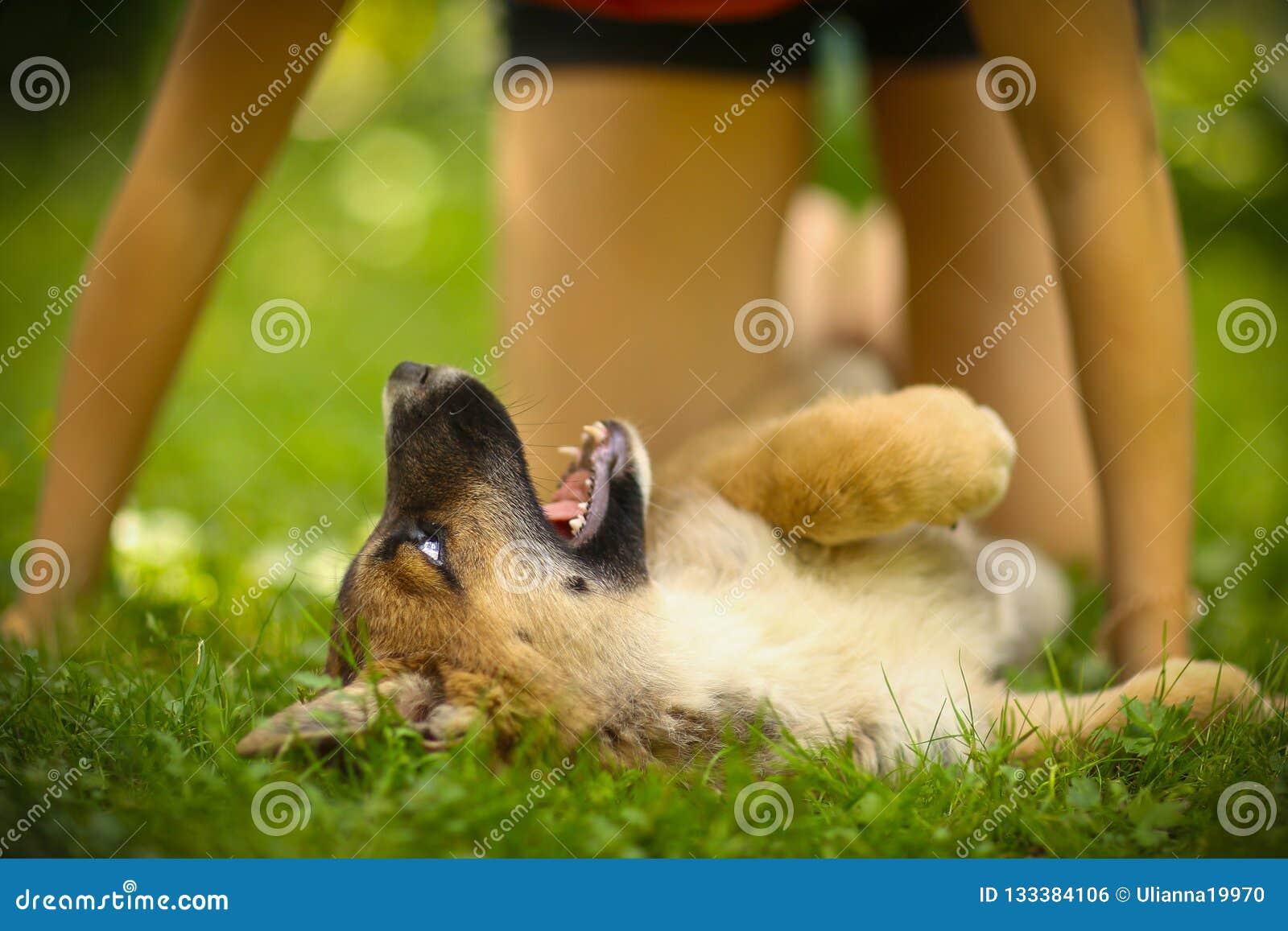 Teenager girl hug puppy shepherd dog close up photo