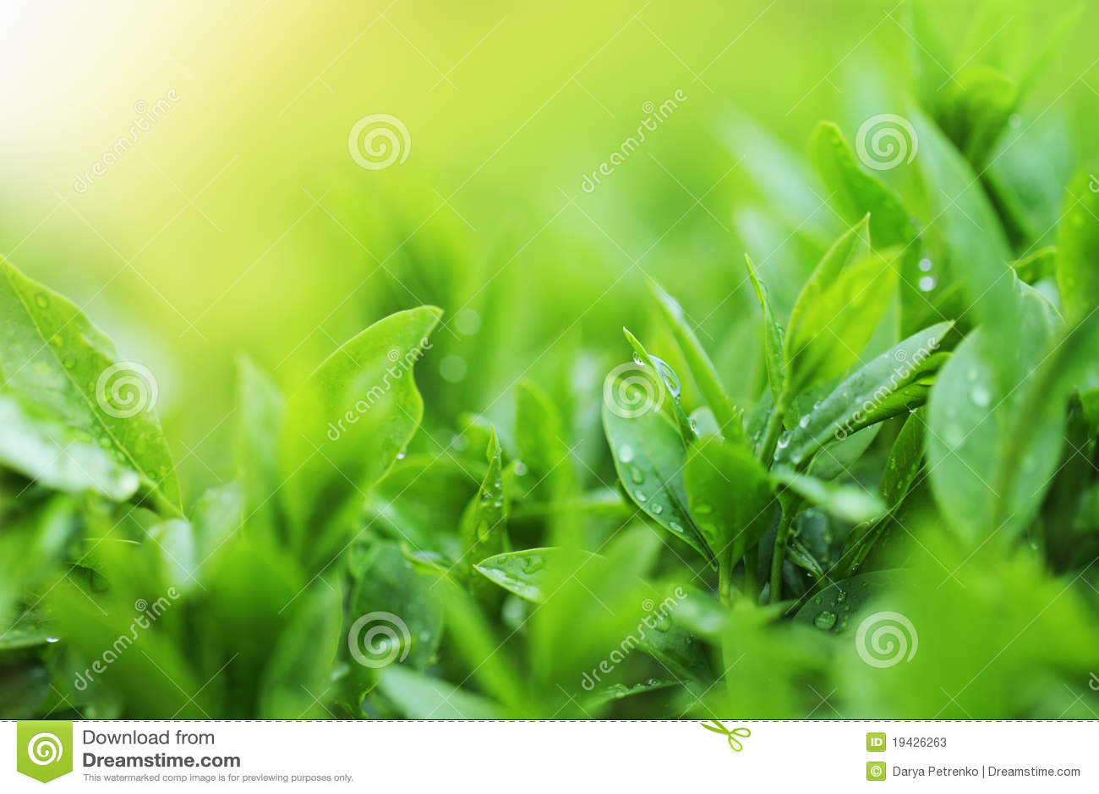Teeplantageabschluß herauf Hintergrund