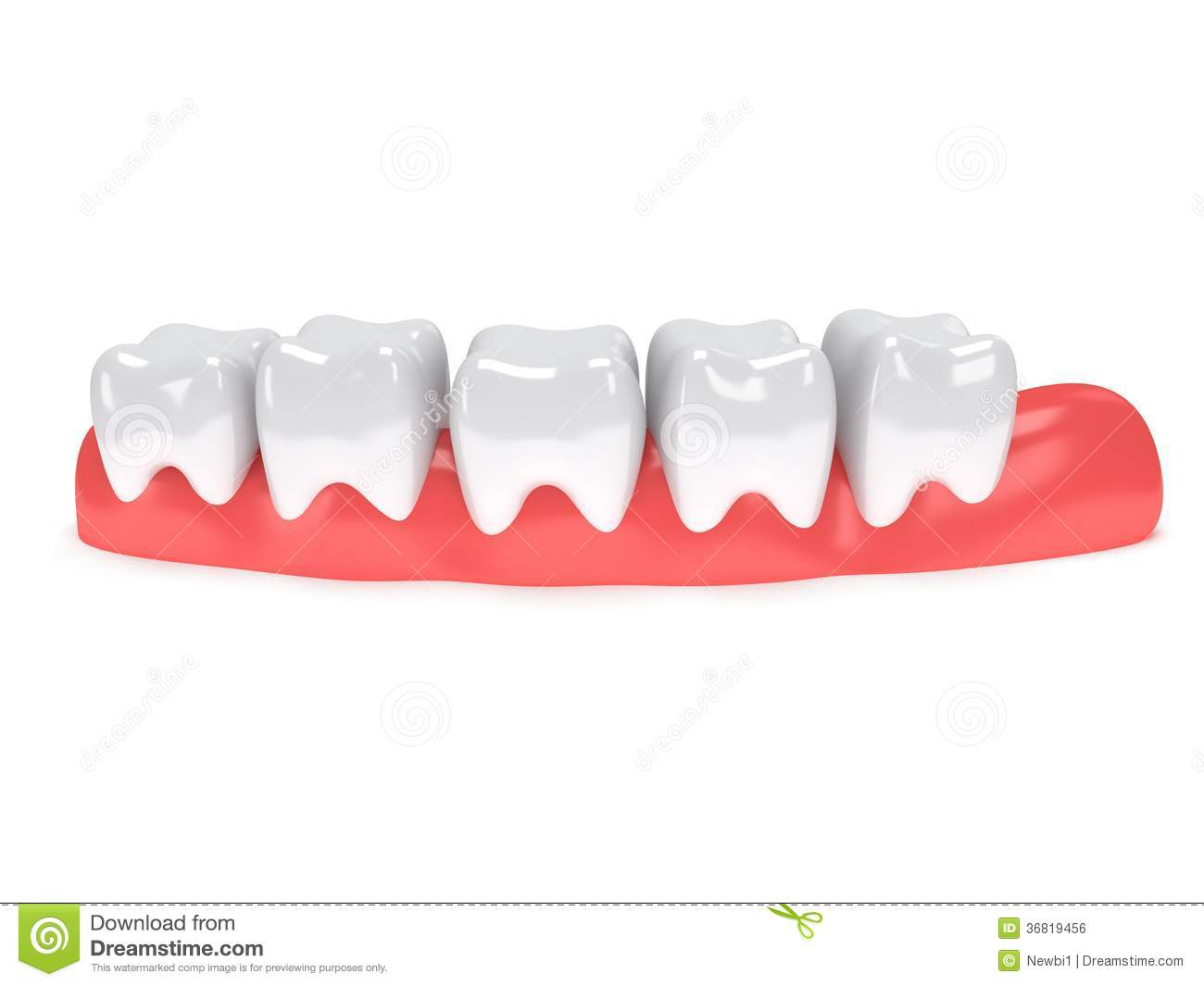 Teeth On Gingiva Isolated On White Back Stock Illustration