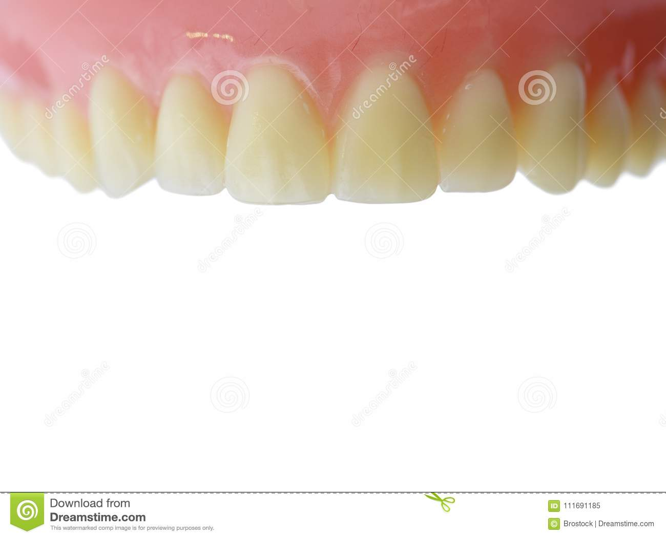 Teeth Gum Anatomy Model With Copy Space. Isolated On White ...