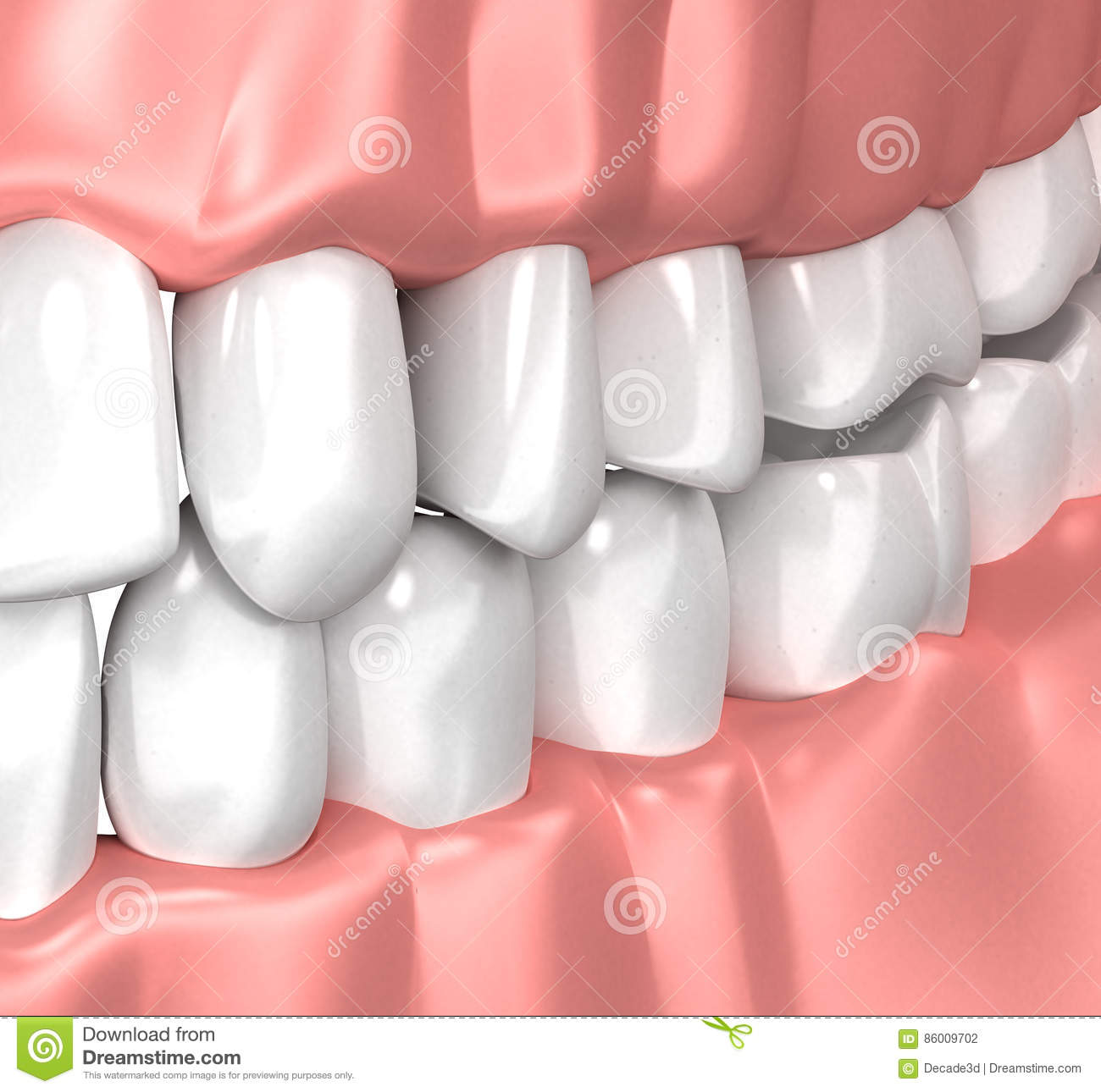 Teeth Gum Human Mouth Anatomy 3d Illustration Stock Illustration