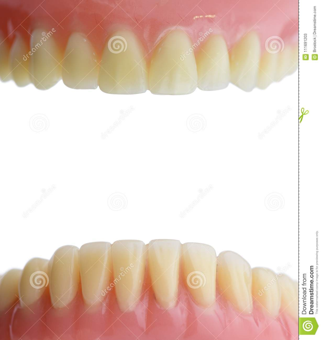 Teeth Gum Human Mouth Anatomy Isolated On White Background Stock
