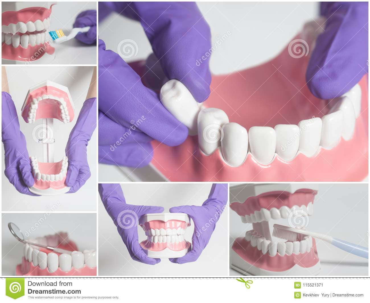Teeth Human Modelntal Care Conceptllage Stock Image Image Of