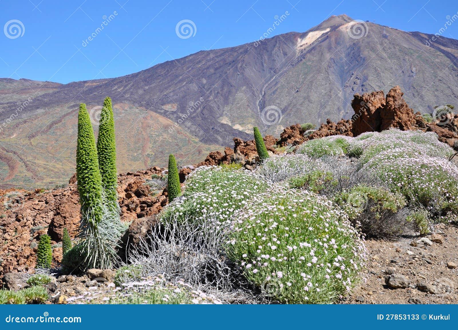 Teide Park Narodowy