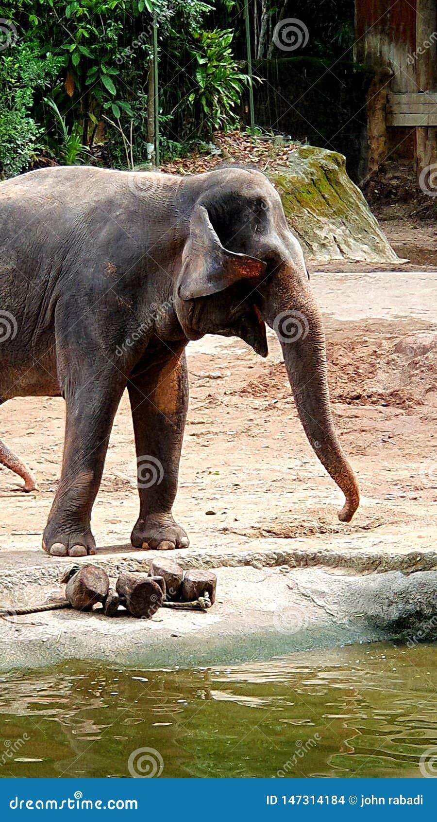 Teil des großen Elefanten