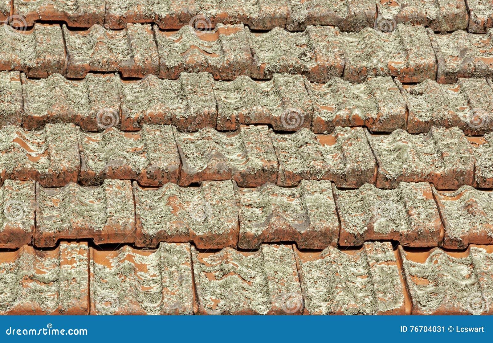 Tejas de tejado de la terracota cubiertas en Lichen Fungus