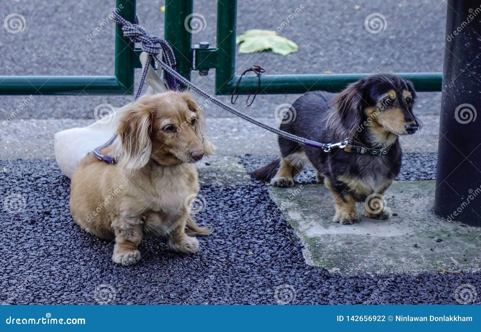 Tekkelhonden in openlucht