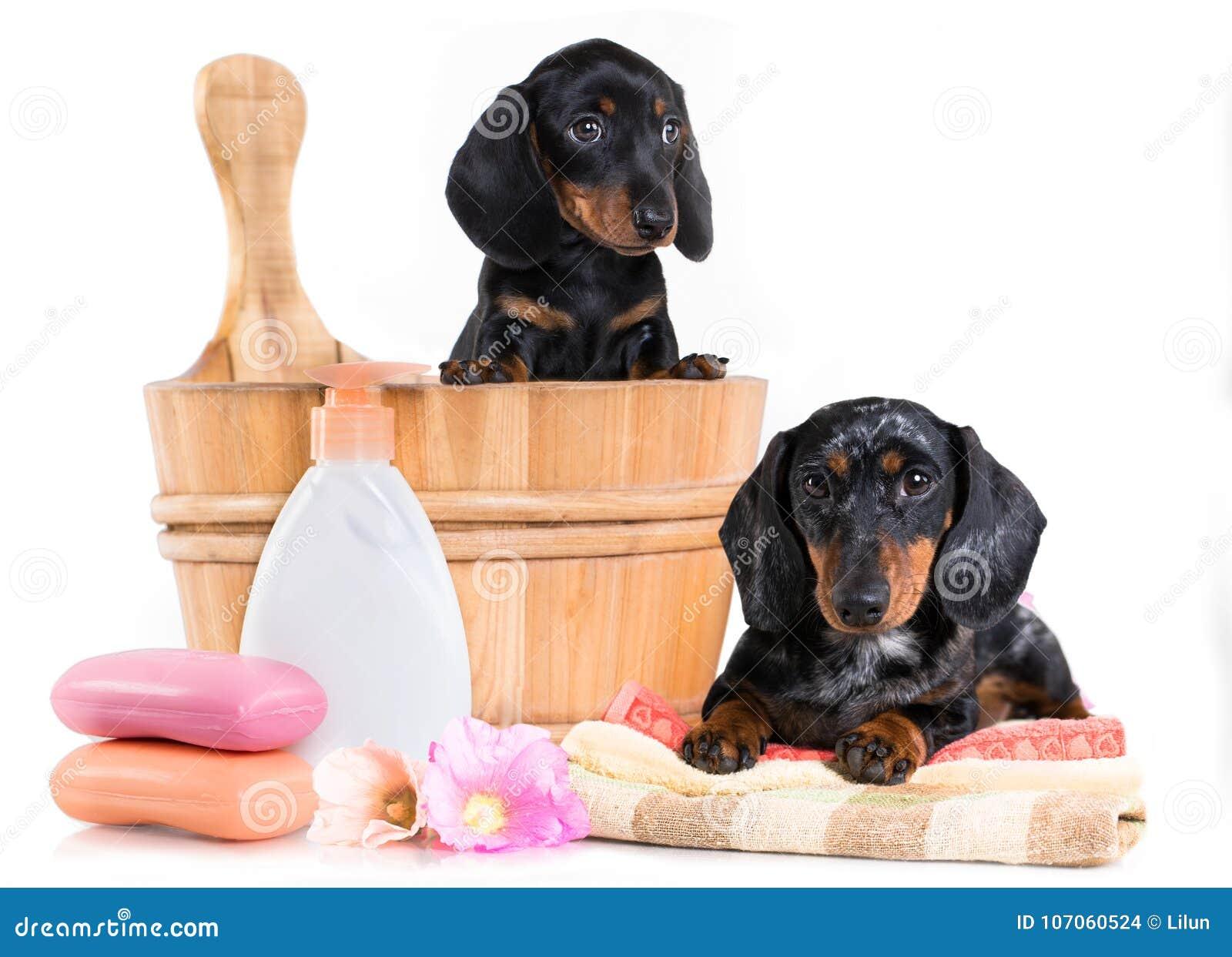 Tekkelpuppy in houten wasbassin