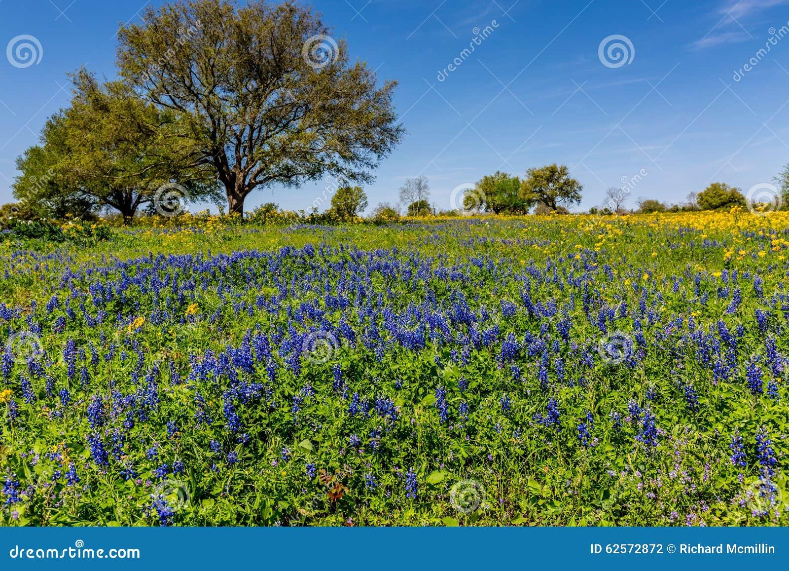 Teksas pole Zakrywający z Różnorodnymi Teksas Wildflowers