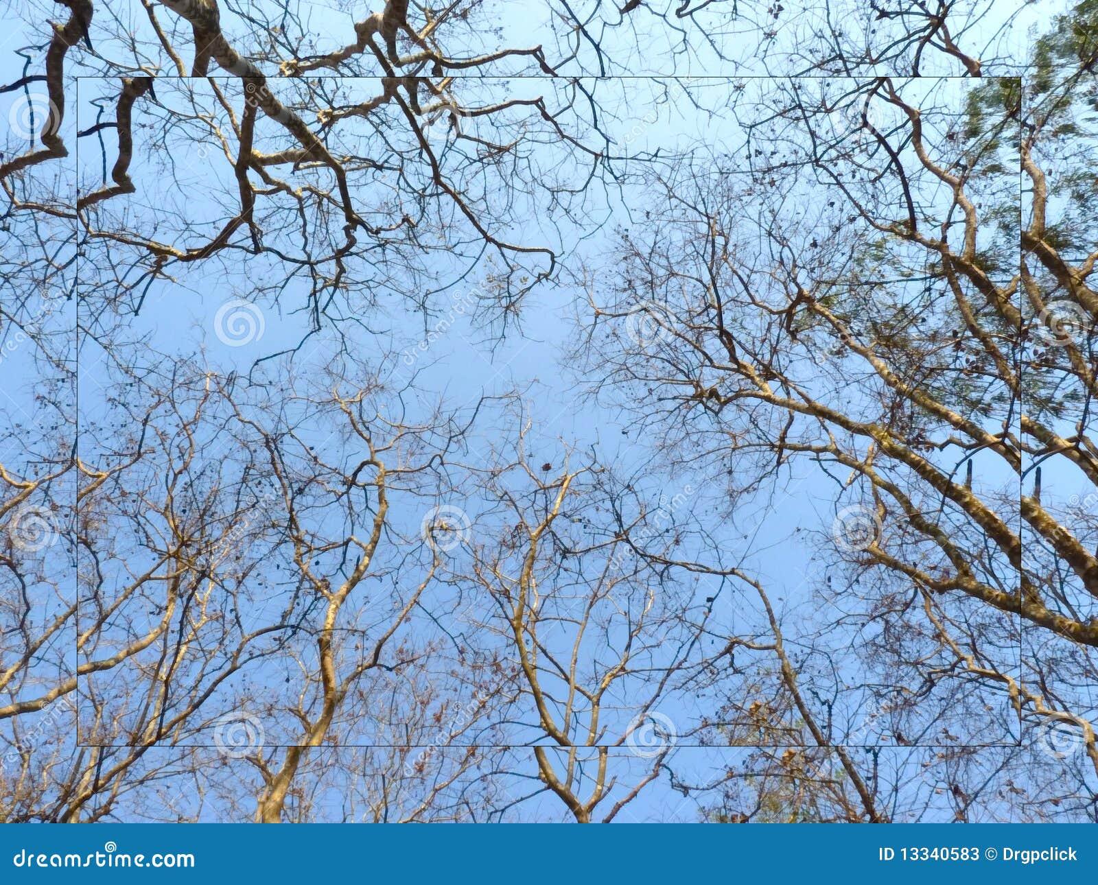 Tekstur drzewa