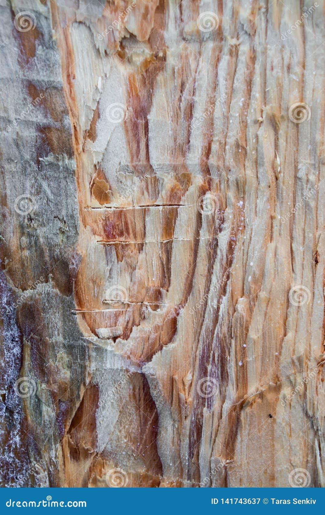 Tekstura sosna, woodcutter ax, wandala piękny naturalny tło