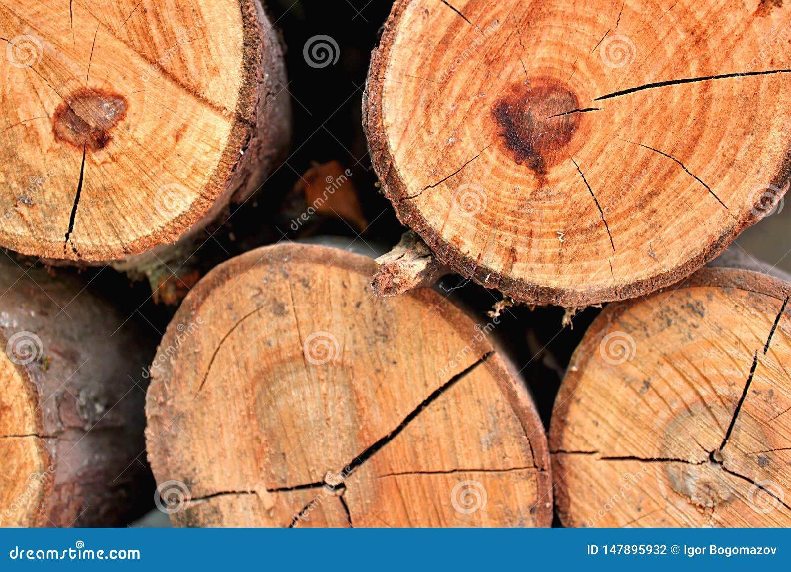 Tekstura suchy drewno dla graby