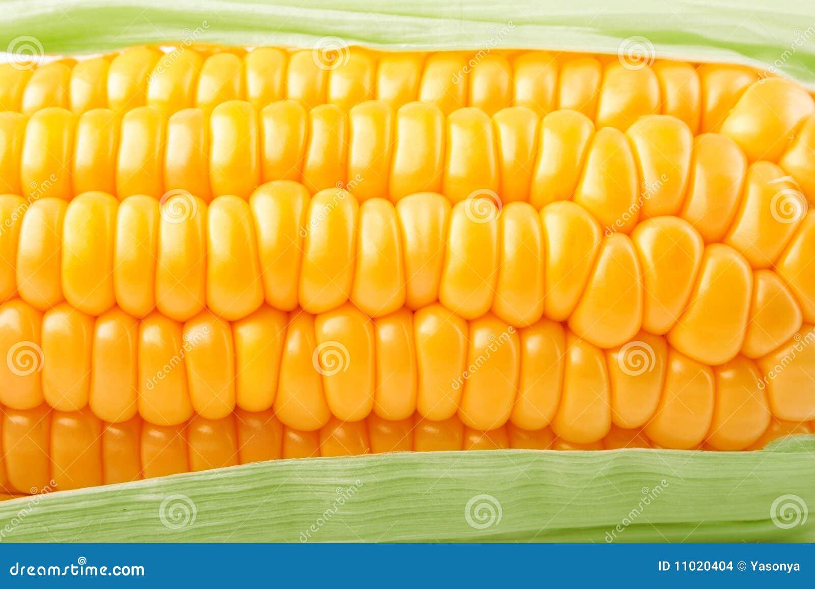 Tekstury kukurydzany świeży warzywo