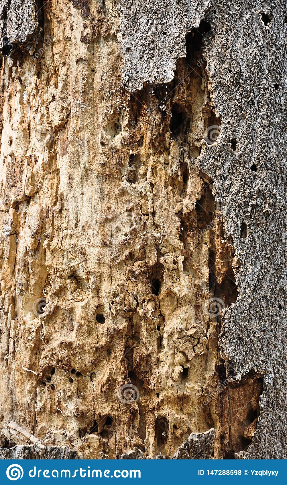Tekstury Więdłam Drzewna barkentyna