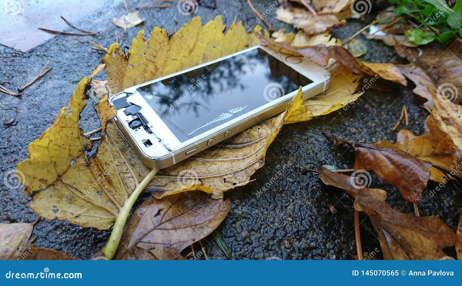 Telefon med den brutna skärmen i höstsidor som ligger på den konkreta banan