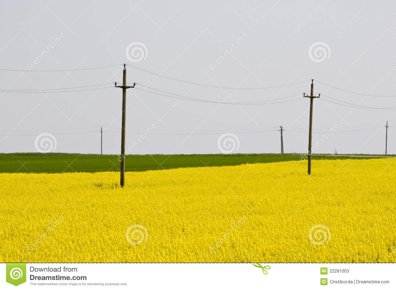 telephone electricity poles in yellow rapeseed stock Utility Pole Telephone Clip Art