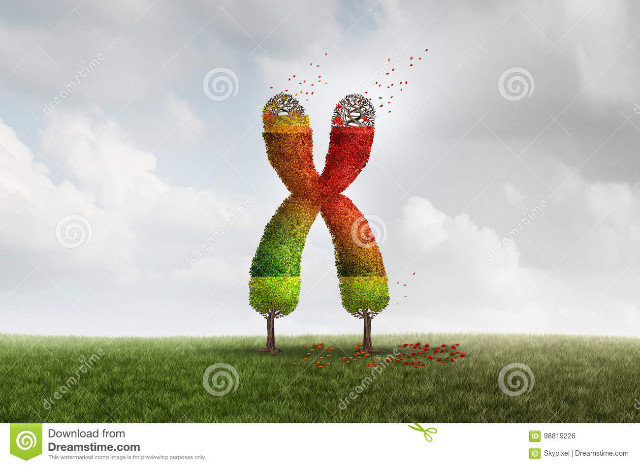 Telomere Aging Health Concept