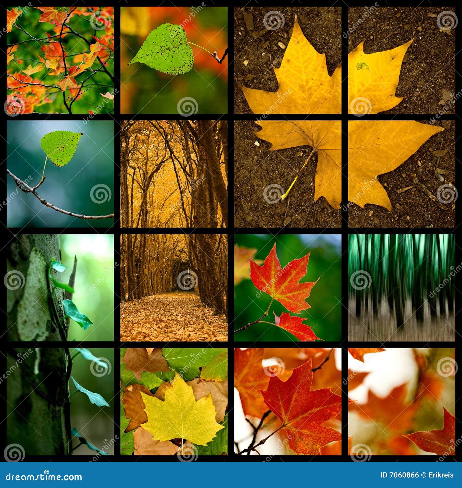 Tema di autunno
