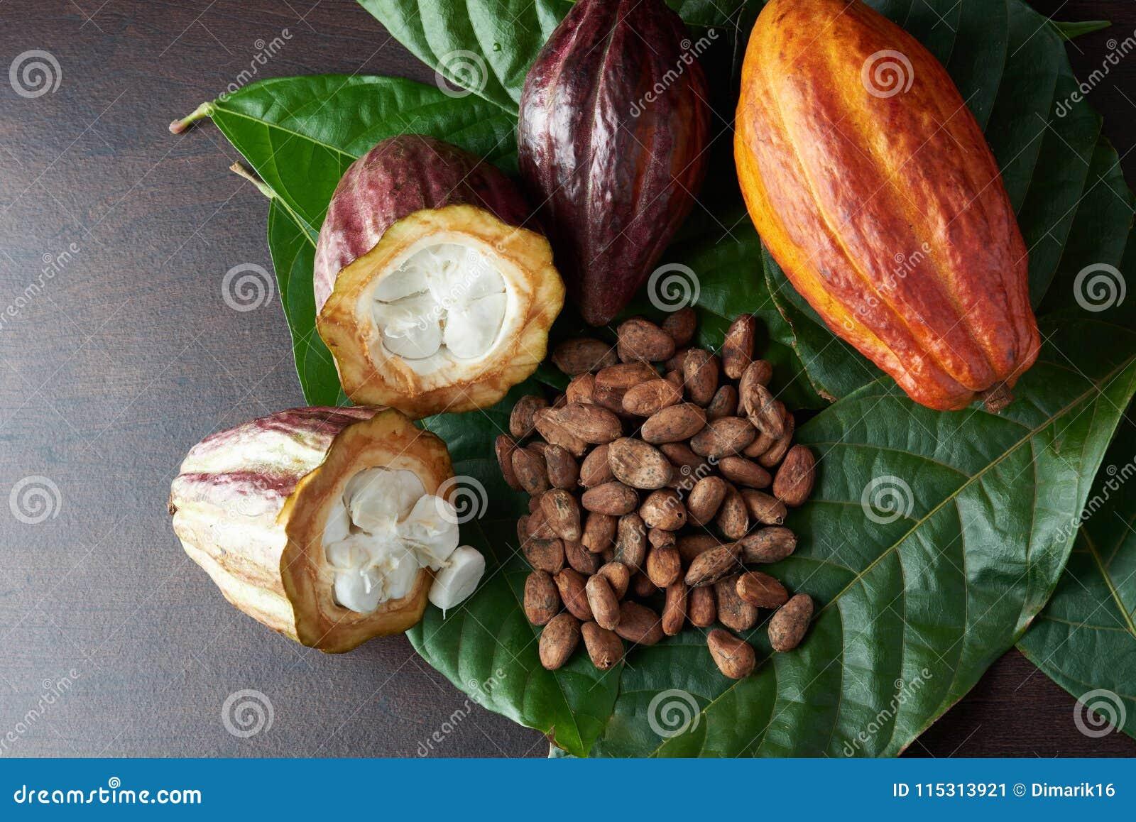 Tema Organico Della Pianta Del Cacao Immagine Stock Immagine Di