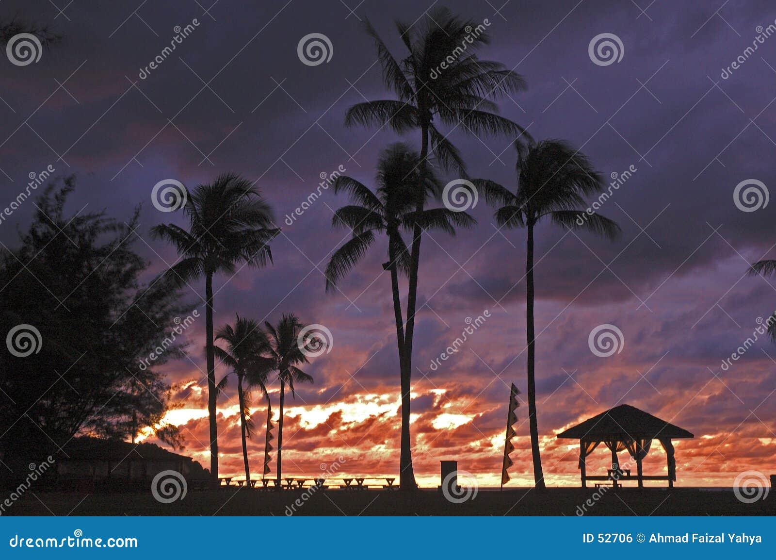 Download Tempête dans le paradis photo stock. Image du arbres, tonne - 52706