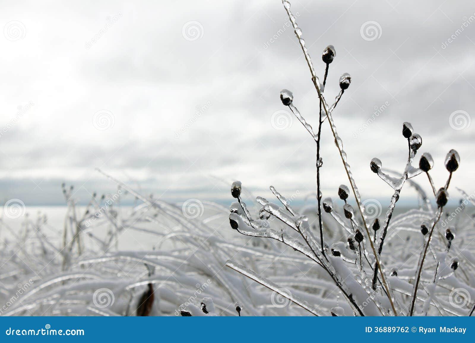 Download Tempesta di ghiaccio fotografia stock. Immagine di appendere - 36889762