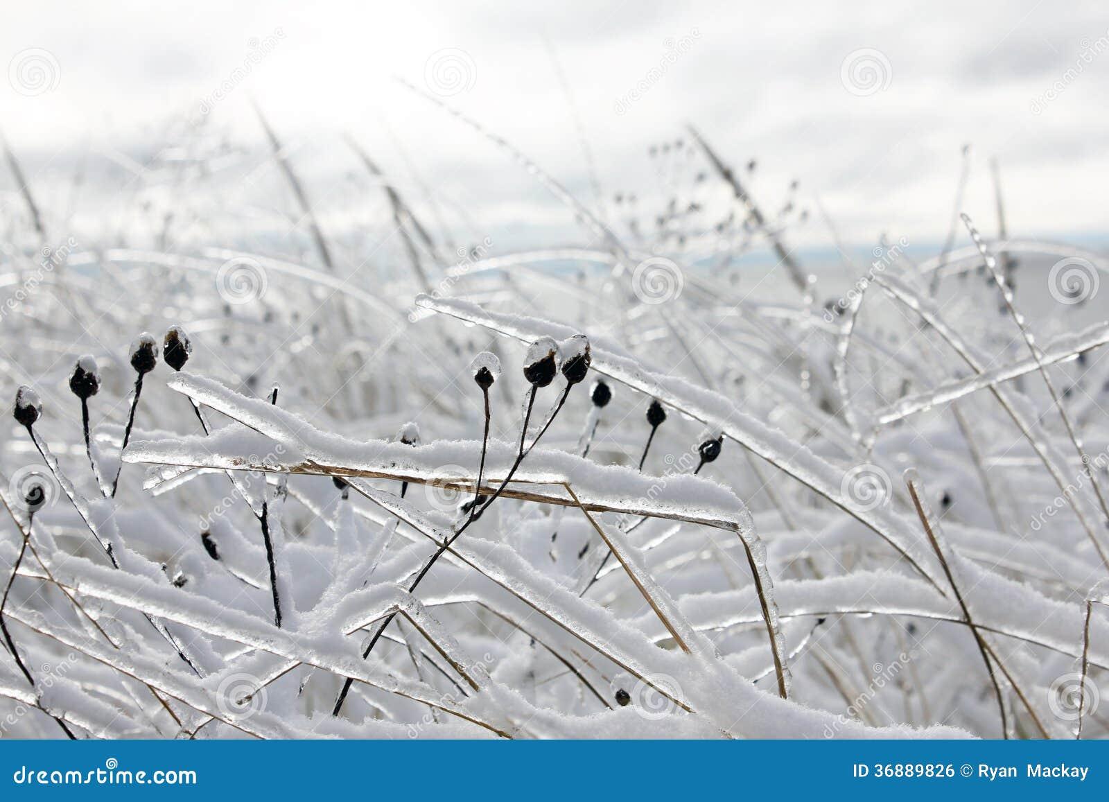 Download Tempesta di ghiaccio fotografia stock. Immagine di temperatura - 36889826