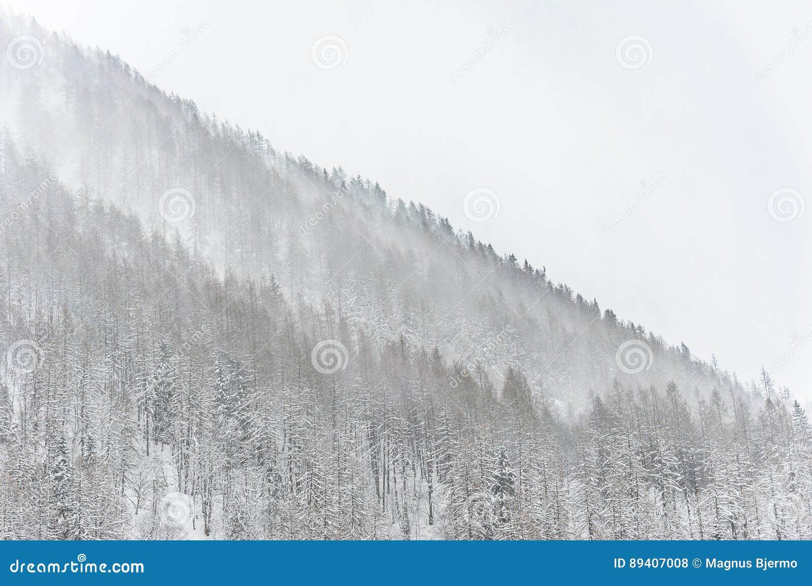 A tempestade da neve do inverno que varre através da árvore cobriu a montanha