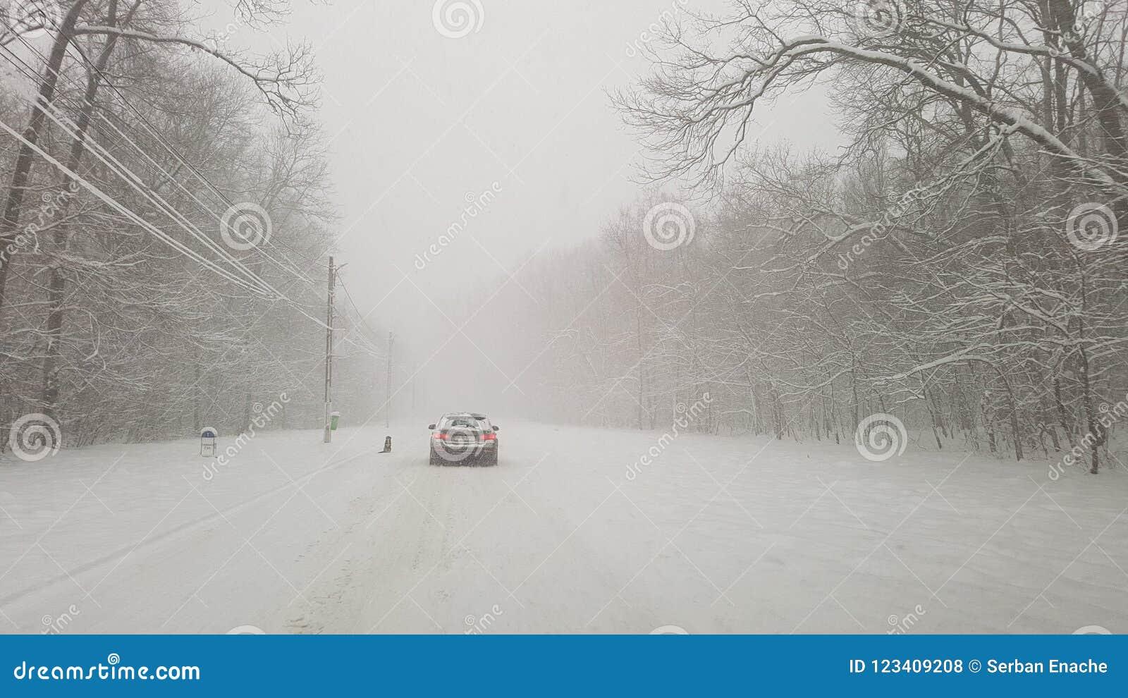 Tempestade do inverno na floresta de Ostratu