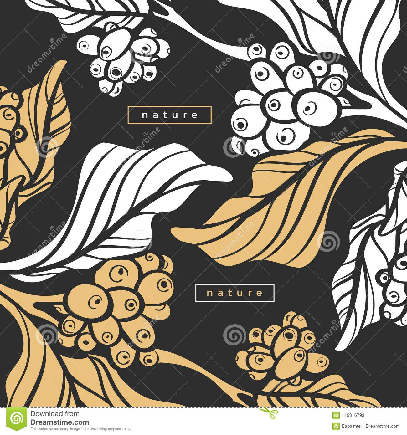 Template Of Coffee Tree With Leaf, Bean. Vector ...