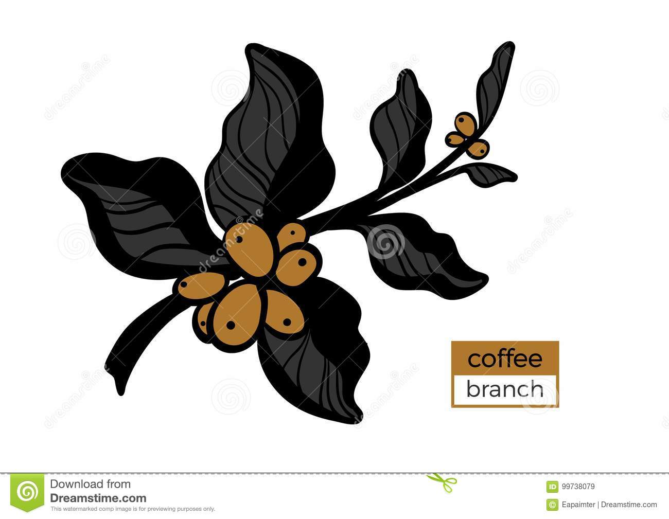 Template Of Color Branch Of Coffee Tree With Leaves And ...