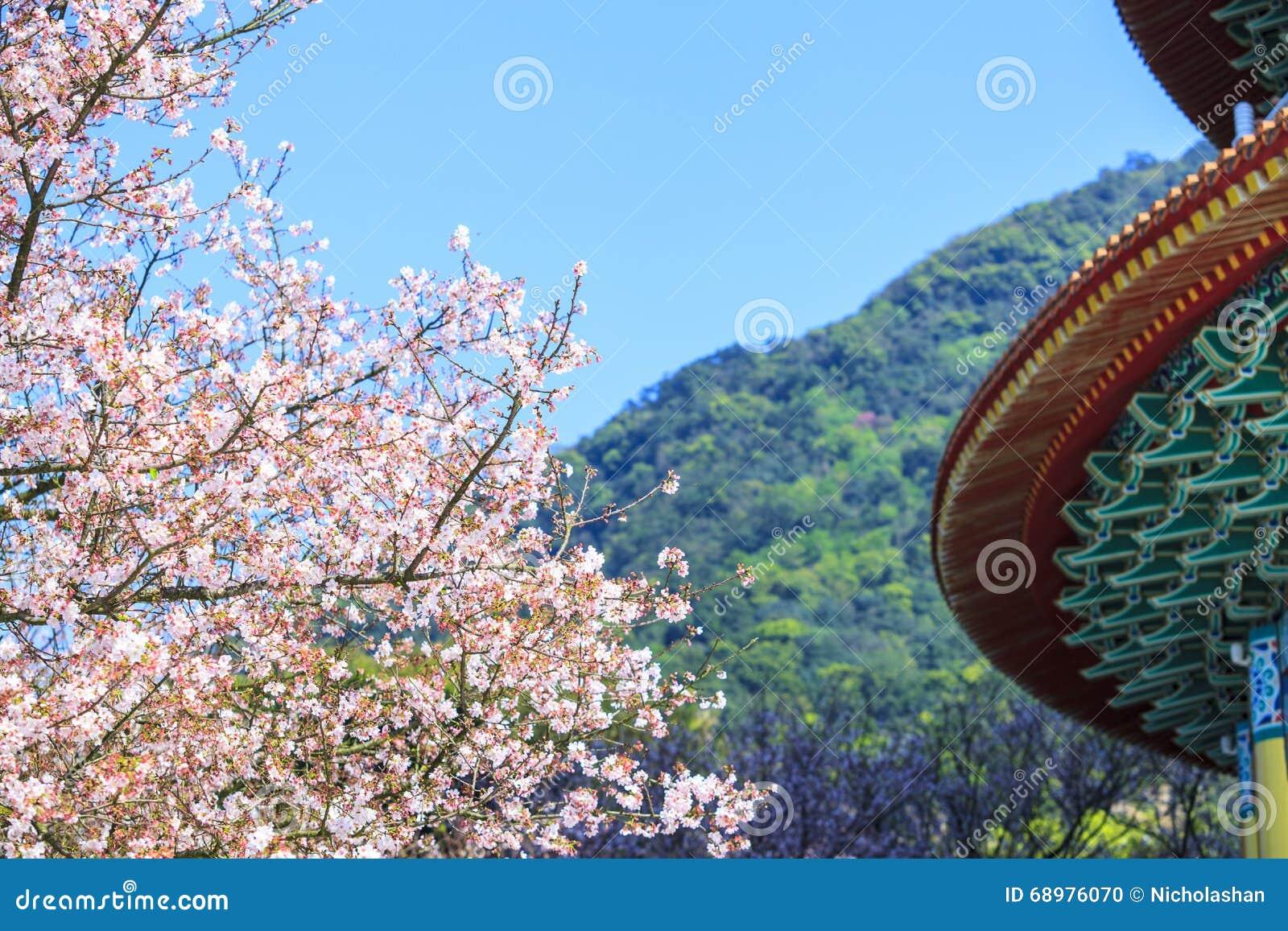 Temple de Tien-yuans avec des fleurs de cerisier dans la nouvelle ville de Taïpeh, Taïwan