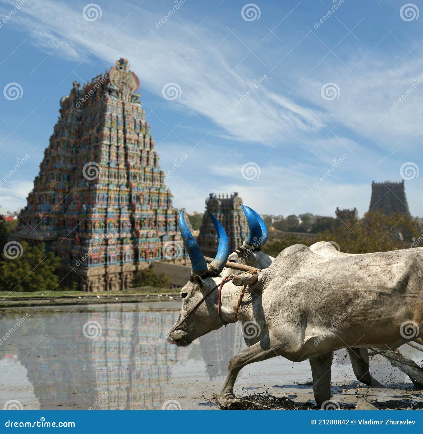 Temple indou de Meenakshi à Madurai, Tamil Nadu