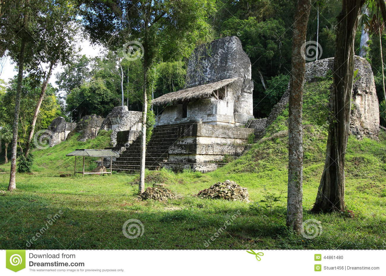 Remains of ruined Mayan temple surrounded by jungle in the abandoned ...