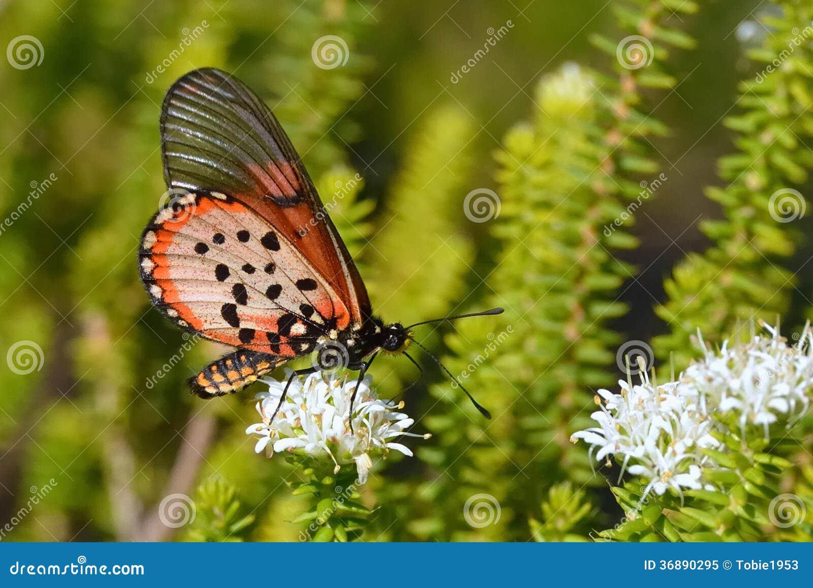 Download Tempo Colourful Dello Spuntino Immagine Stock - Immagine di insetto, colore: 36890295