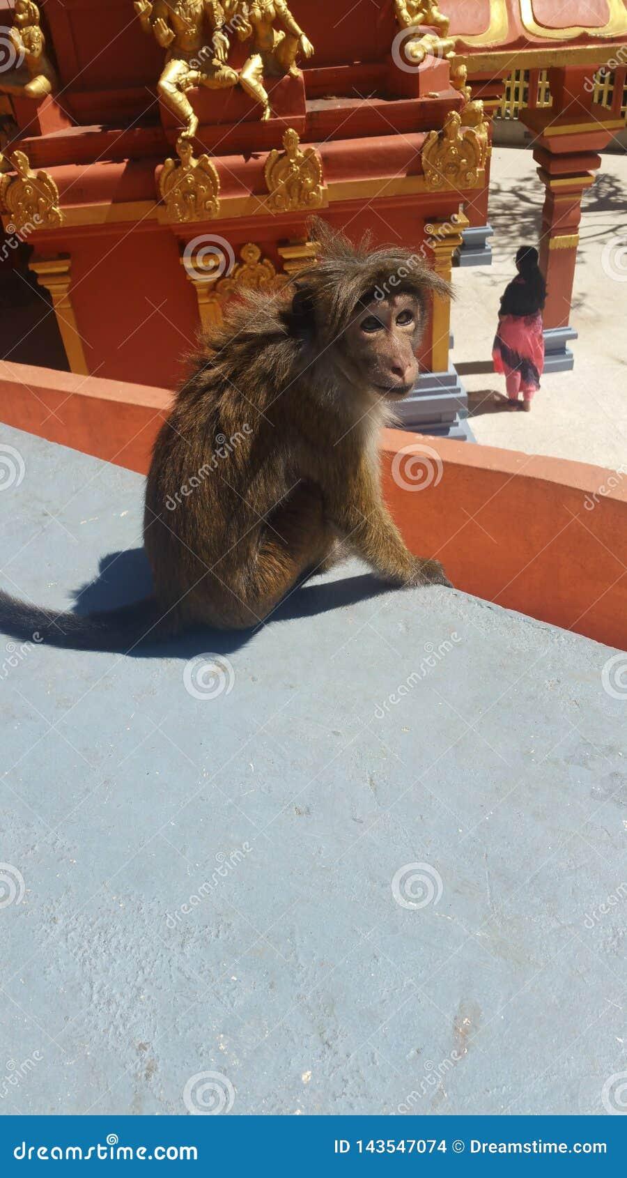Tempo de macaco