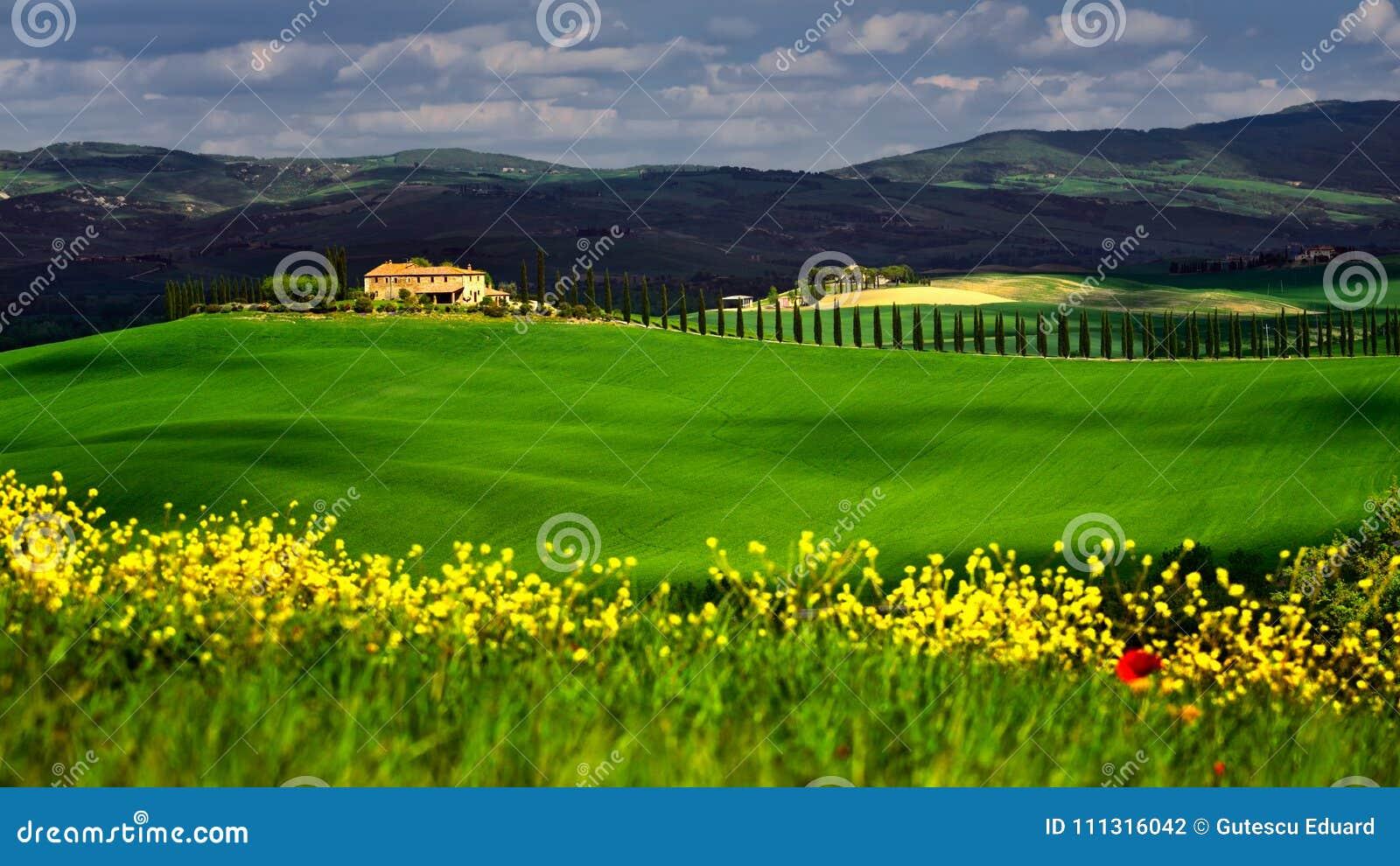 Tempo de Toscânia na primavera com campos verdes e as flores amarelas