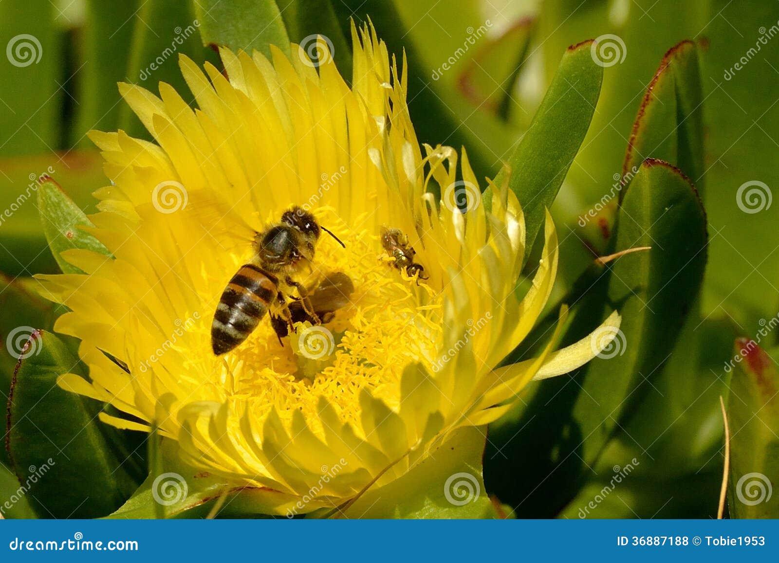 Download Tempo Dello Spuntino In Fuga Fotografia Stock - Immagine di colore, insetto: 36887188