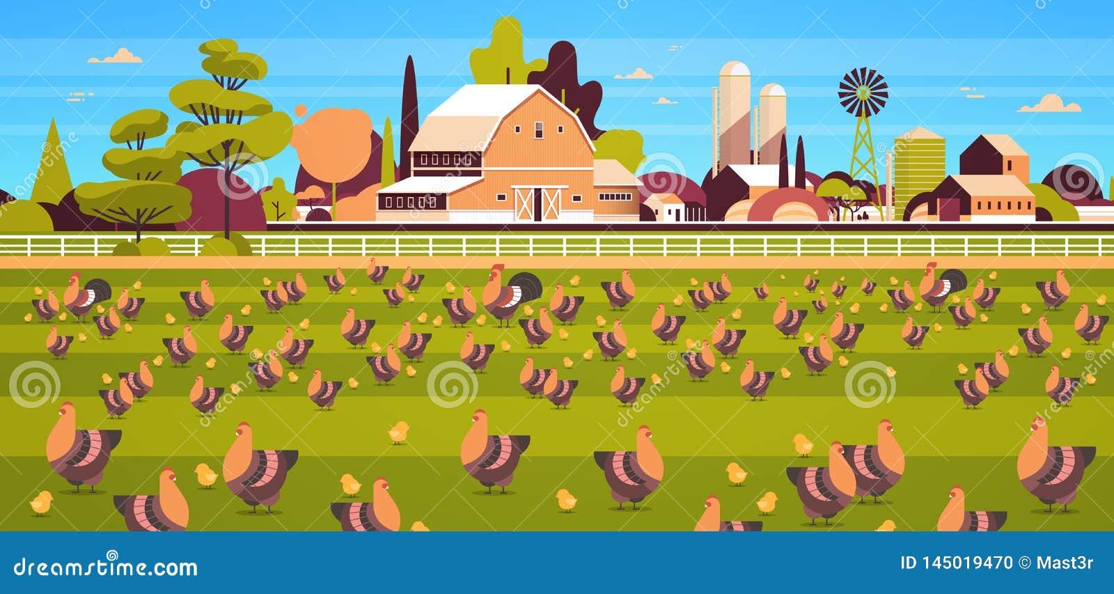 Tempo di alimentazione libero della gamma del gallo e del pollo che coltiva allevamento hed per il terreno coltivabile del campo