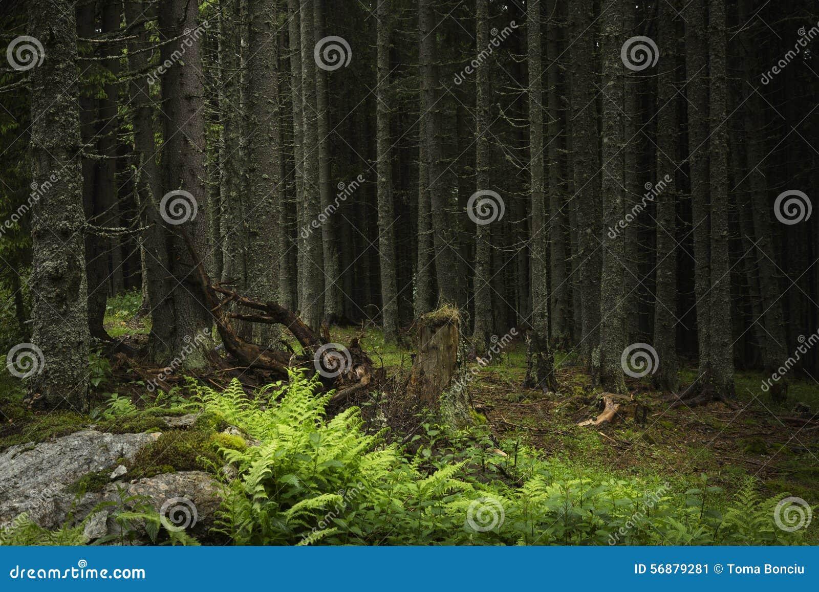 Tempo di primavera nella foresta del fogy