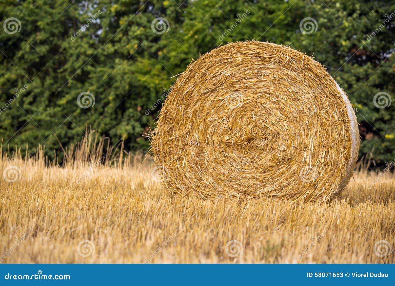 Tempo di raccolto del grano