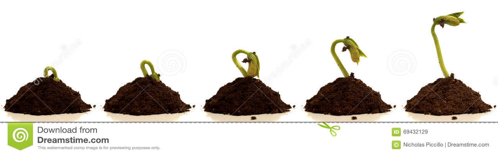 Tempo-lapso de Bean Sprout