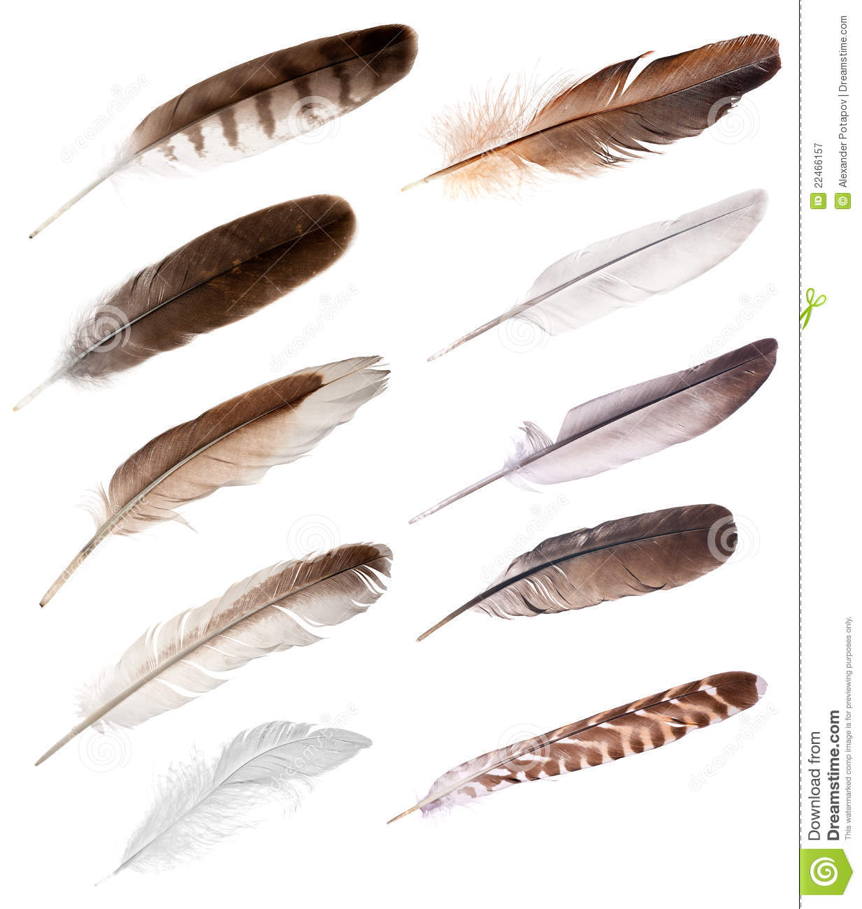 Different bird feathers - photo#36