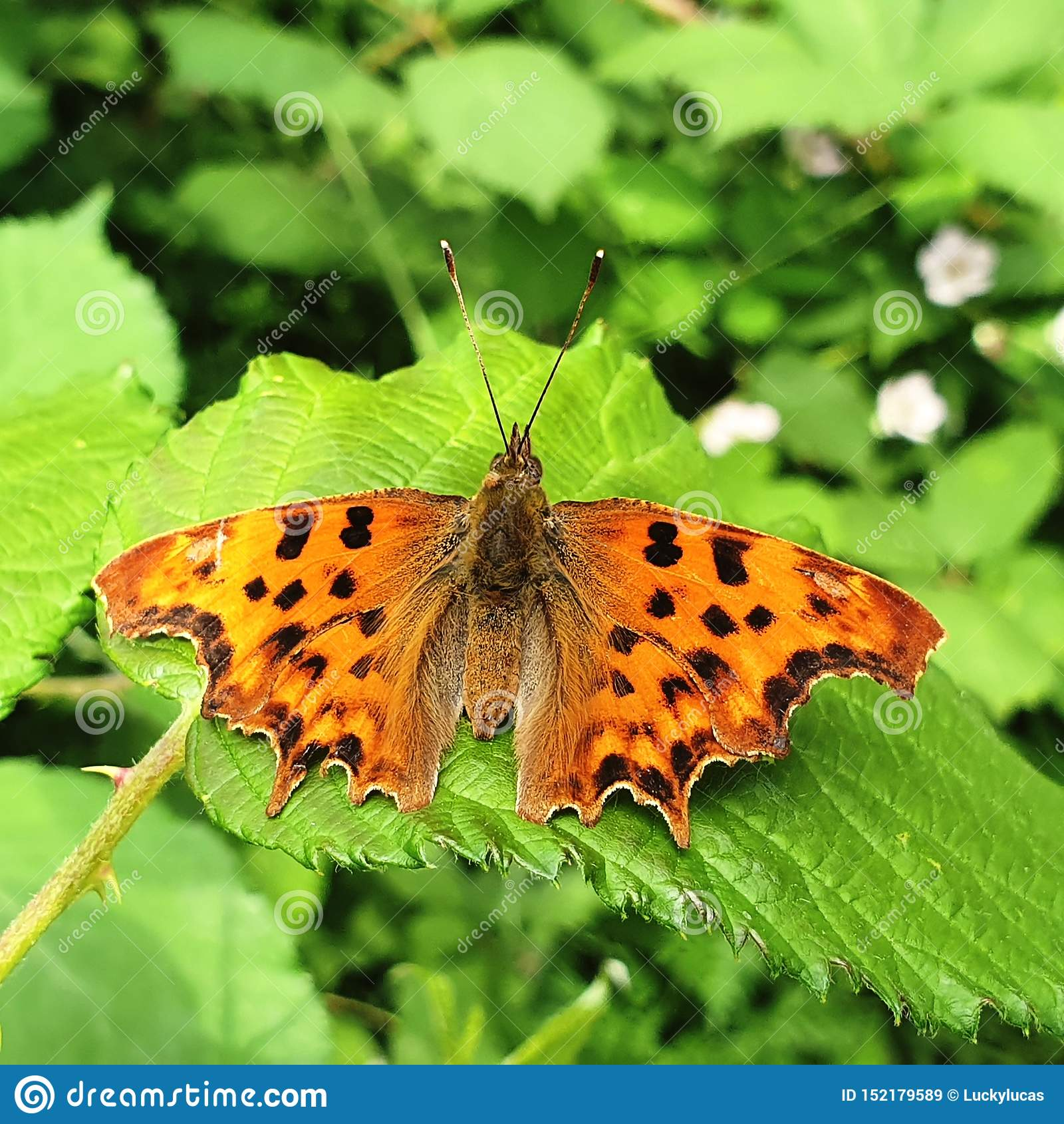 Ten motyl jest pięknem matka natura