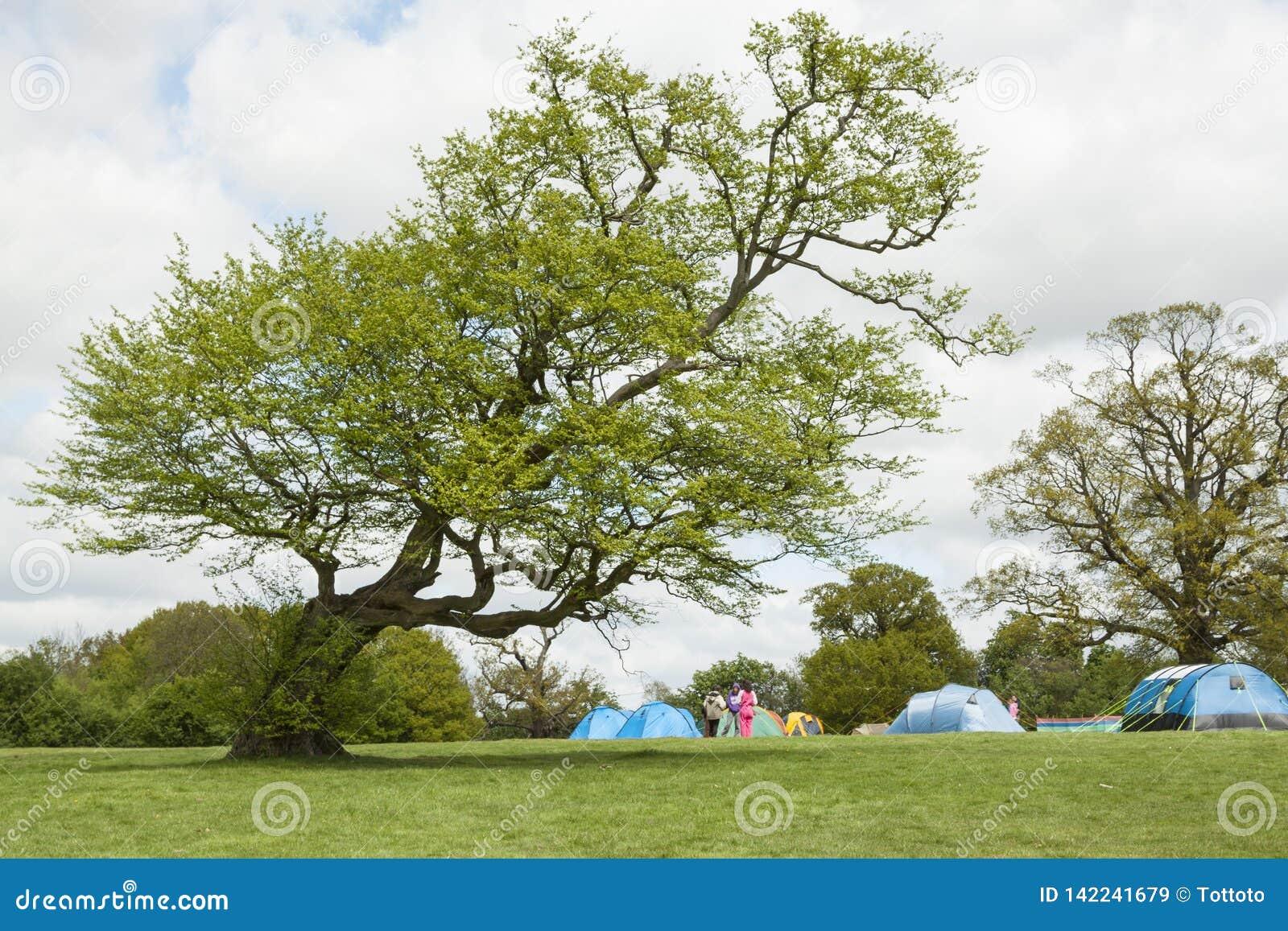 Tenda di campeggio di avventure sul prato verde sotto l albero inclinato