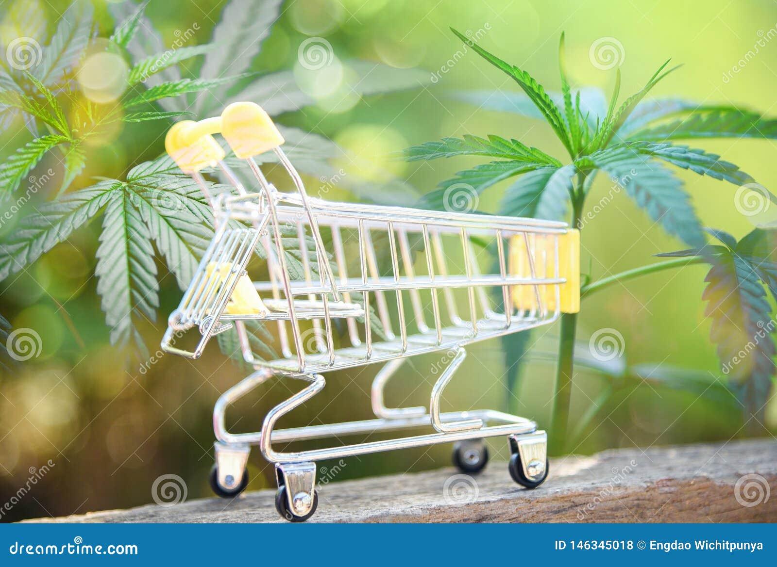 Tendance d industrie de marché de marijuana d affaires de cannabis élever plus haut rapidement le concept