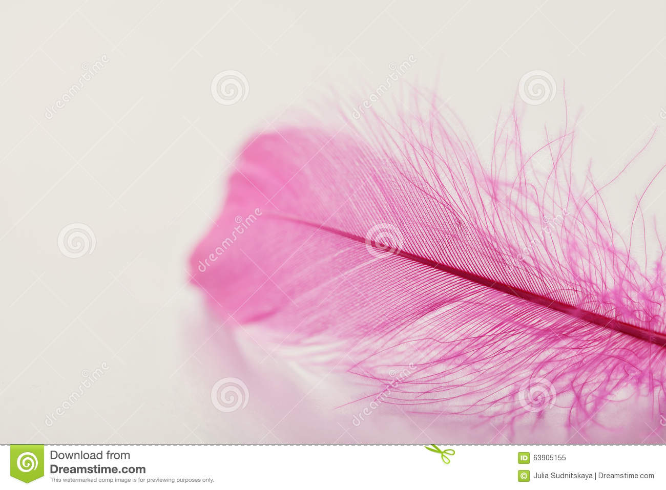 Tender Feather On Light Background For Your Design, Pink .